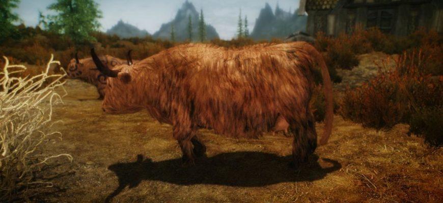 HD коровы