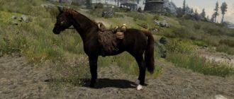 Новая порода лошадей